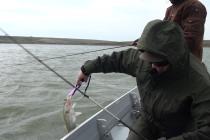 Pescari în timpul prohibiţiei