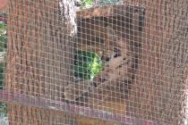 Distracție în parcul Zoo