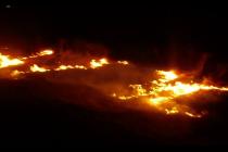 Au ars trei hectare de pădure