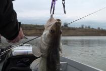 La pescuit de amenzi
