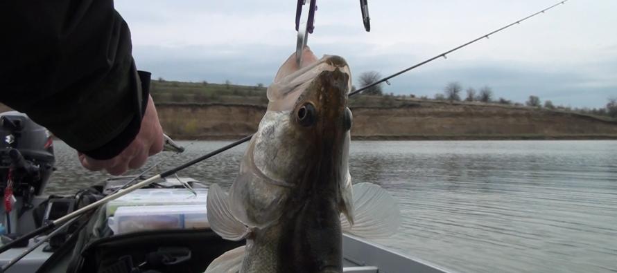 Acțiuni privind braconajul piscicol în zona orașului Bicaz
