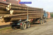 Sancţiuni pentru transport ilegal de material lemnos