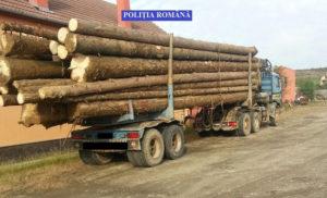 lemn-confiscat-damuc