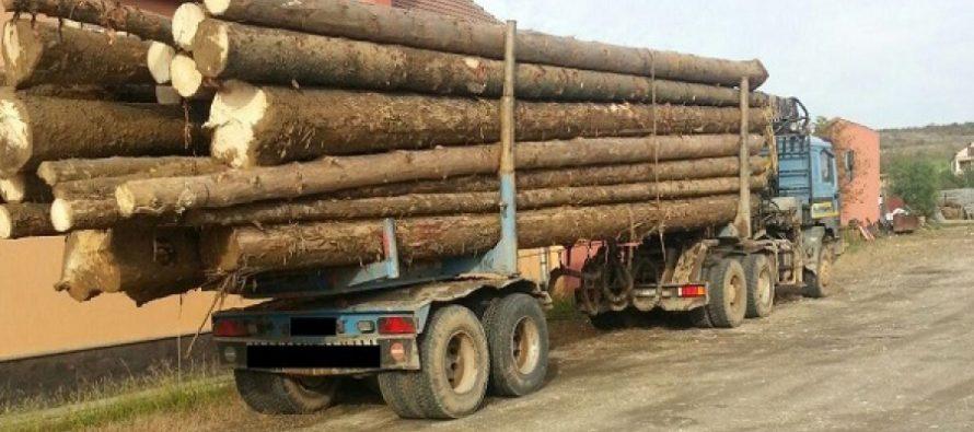 Transport ilegal de lemne oprit de polițiști la Tarcău
