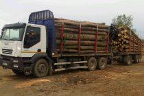 Transport de lemne fără acte legale depistat de poliţişti