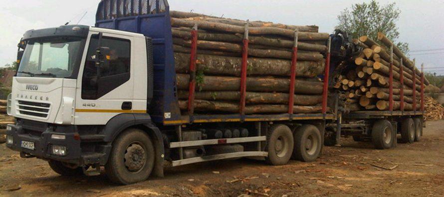 Bărbat din Borca amendat pentru transport ilegal de lemne