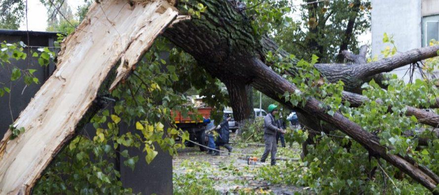 Primarul comunei Săvinești a intervenit pentru degajarea unui copac căzut