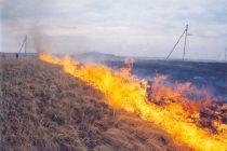 Incendiu de vegetaţie stins de pompieri în comuna Negreşti