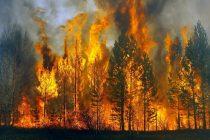Incendiu în pădurea de la Bicaz Chei