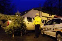 Brazii de Crăciun în atenţia poliţiştilor nemţeni