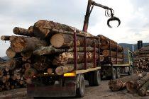 Transporturi ilegale de lemne cu numere de înmatriculare false