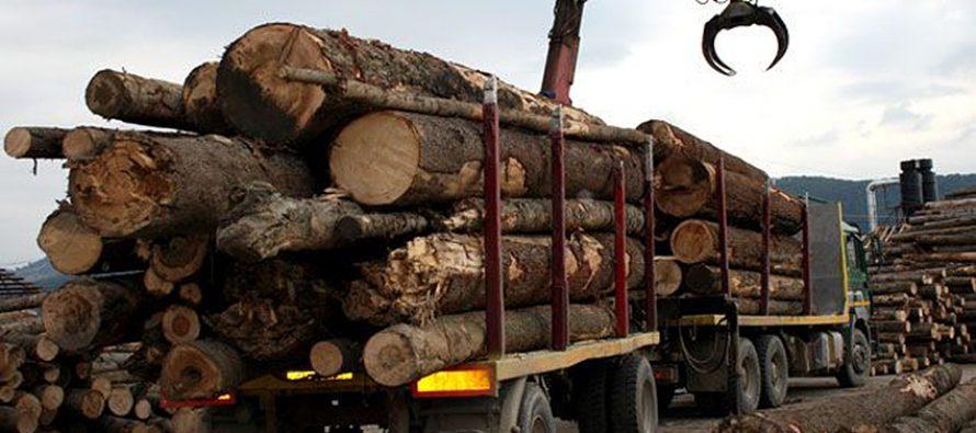 Amenzi de 18.000 de lei pentru transport ilegal de material lemnos