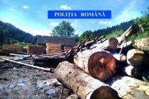 92 mc de material lemnos confiscat de poliţişti în judeţul Neamţ