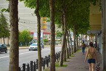 Acţiuni de tăiere a castanilor care pun în pericol pietonii şi traficul rutier