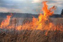 Incendiu de vegetaţie uscată pe un teren viran din municipiul Piatra Neamț