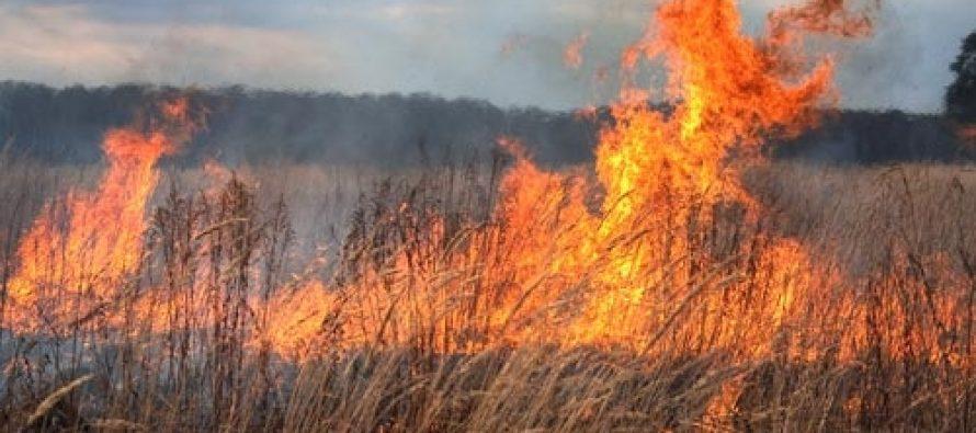 Joi, 21 martie: 4 incendii de vegetație uscată întinse pe 5 hectare
