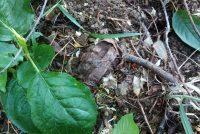 Un cetăţean a descoperit o grenadă în timp ce efectua lucrări agricole