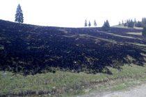 8 hectare arse în urma unui incendiu de vegetație în comuna Hangu