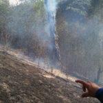 Incendiu vegetatie Tosorog 2