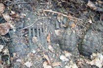 O cantitate însemnată de muniţie neexplodată descoperită în comuna Brusturi