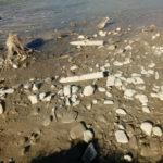 30.09 munitie neexplodata_Albia raului Moldova 1