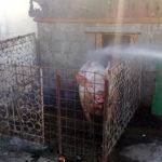 Porc stana Gandinti