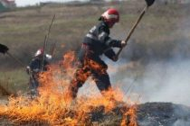 Incendiu de vegetaţie în localitatea Valea Ursului