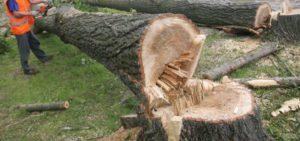 au-taiat-ilegal-lemne-din-padure
