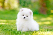 Vaccinarea antirabică nu mai este condiţionată de microciparea în prealabil câinilor