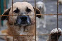 Salubritas: 579 câini comunitari adoptați și 536 de sterilizări în 2018