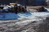 90 mc material lemnos confiscat și amenzi de 40.000 lei aplicate de polițiștii nemțeni