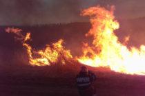 Incendiu de vegetație la Ghindăoani stins cu greu de pompieri