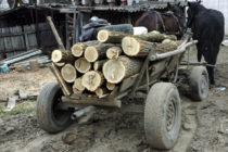 Prinși în timp ce transportau lemne ilegal cu căruța