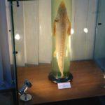 Expozitia Grigore Antipa 150 (2)