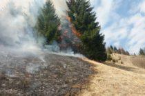 ISU Neamț: Stop incendiilor de vegetație! Alte 32 de hectare arse.