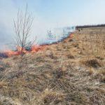 Incendiu vegetatie Negresti