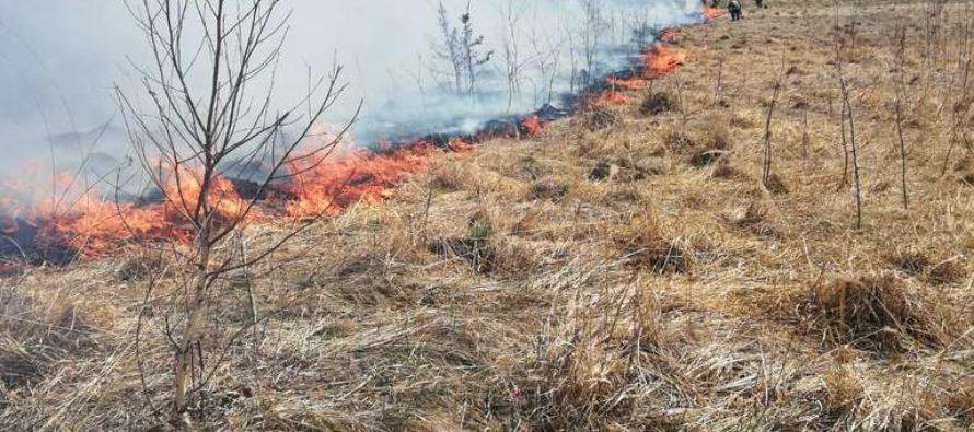 Incendiu de vegetație extins la Bisericani, persoană amendată de pompieri