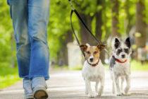 Proprietarii de câini de companie în vizorul Poliției Locale