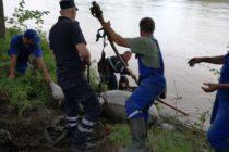 O căruță cu cai a căzut în Bistrița. Pompierii au intervenit pentru salvarea animalelor.