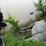 Caruta cu cai cazuta in bistrita (4)