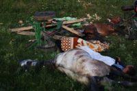4 tineri au căzut cu căruța într-o prăpastie, în apropiere de Tupilați