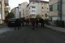 Neglijență sau nesimțire? Cai lăsați să pască pe un spațiu verde din centrul municipiului Piatra Neamț