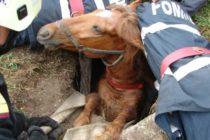 Cal căzut într-un cămin de apă, salvat de pompieri