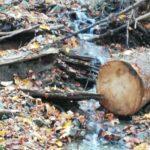 gropi de gunoi ilegale Piatra Neamt (1)