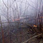 Incendiu vegetatie Ciritei Piatra Neamt (2)