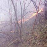 Incendiu vegetatie Ciritei Piatra Neamt (3)