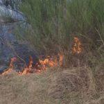 Incendiu vegetatie Dobreni (1)