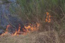 Incendiile de vegetație produse în ultimele zile au afectat aproape 20 de hectare