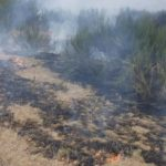 Incendiu vegetatie Dobreni (4)