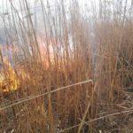 Incendiu vegetatie cotu vames (1)